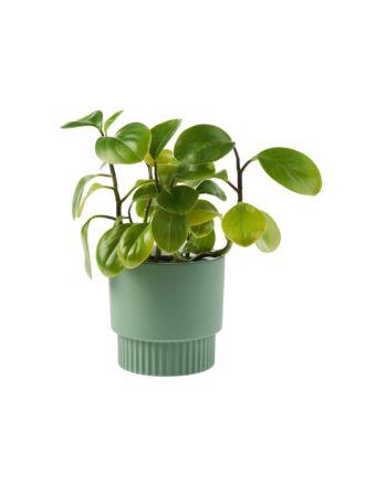 Rivera Green Planter Pot 13cm